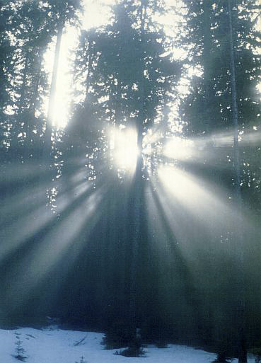 Mlha v lese - menší formát